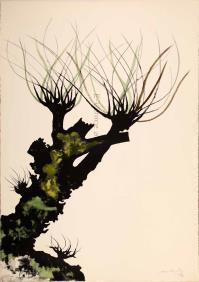 CarloMATTIOLI, Gli alberi II