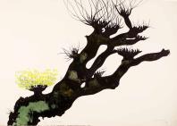 CarloMATTIOLI, Gli alberi I (dalla cartella acquarellata)