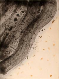 CHINHSIAO, Kosmik virvel (Turbine cosmico)